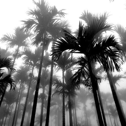 Palms in black and white by connie