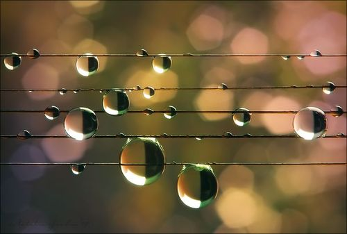 Raindrops_Music of the Rain - Natalia Jeshoa_by fuzzy blue one