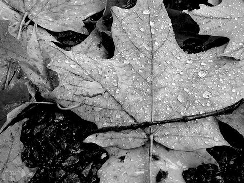 Raindrops by Gbutler