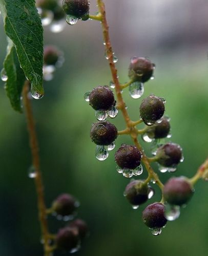Berries after the rain by Waleo by poppy