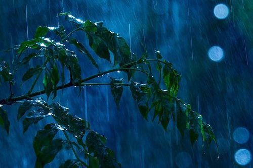 Michael Maximov Summer Rain by robot