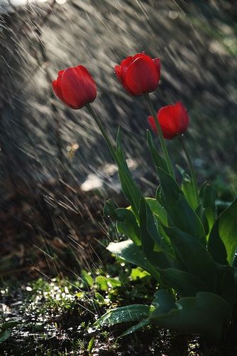Rain down on me - majk20m  by gotinha