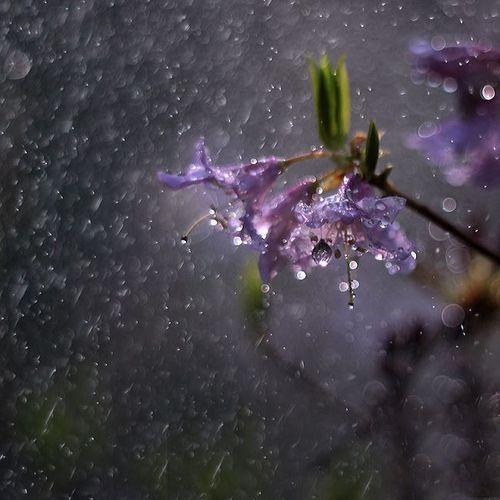 RAIN - Dormik  by gotinha