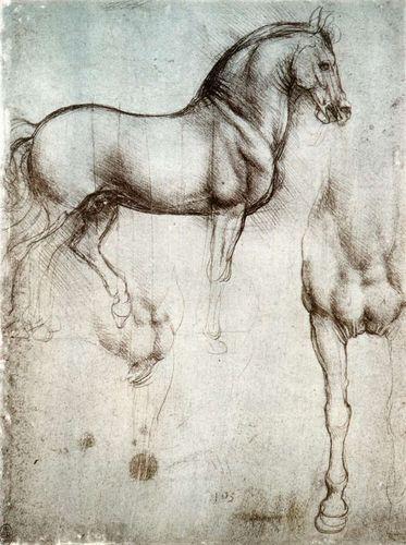 De vinci_etude d un cheval