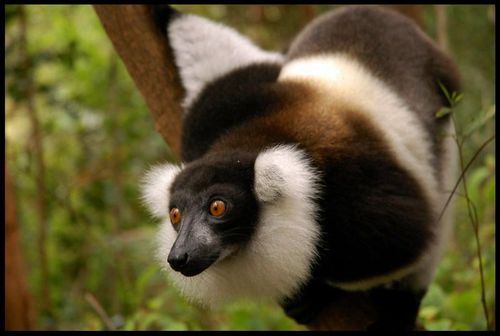Madagascar .