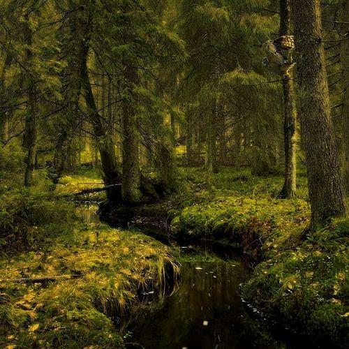 Forest_johan stromberg
