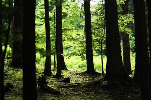 Forest_takezo