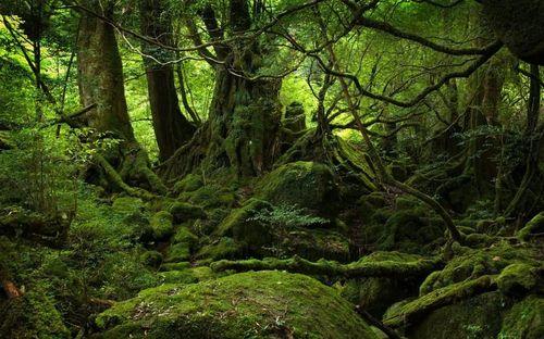 Forest_tzummygyrl