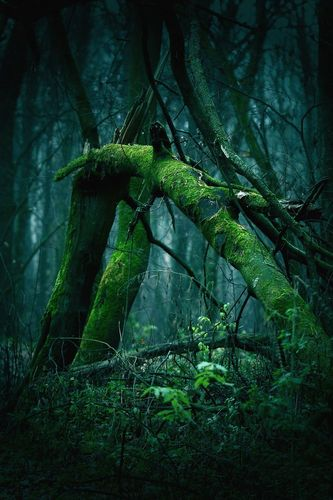 Forest_Leonid_71