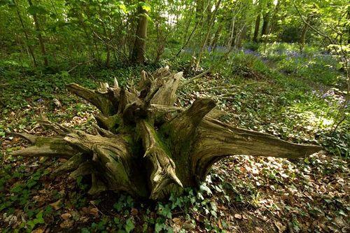 Forest stranger_kev