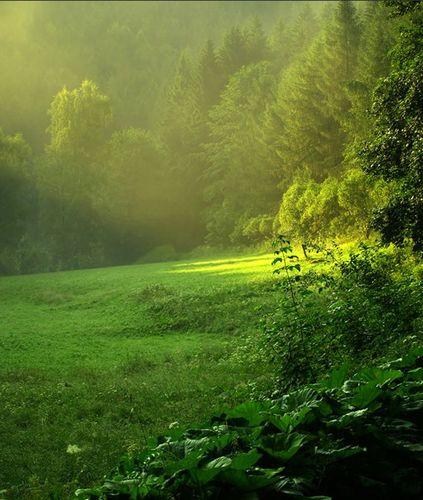 Forest_jedzer